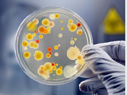 Modification du rendu antibiogramme